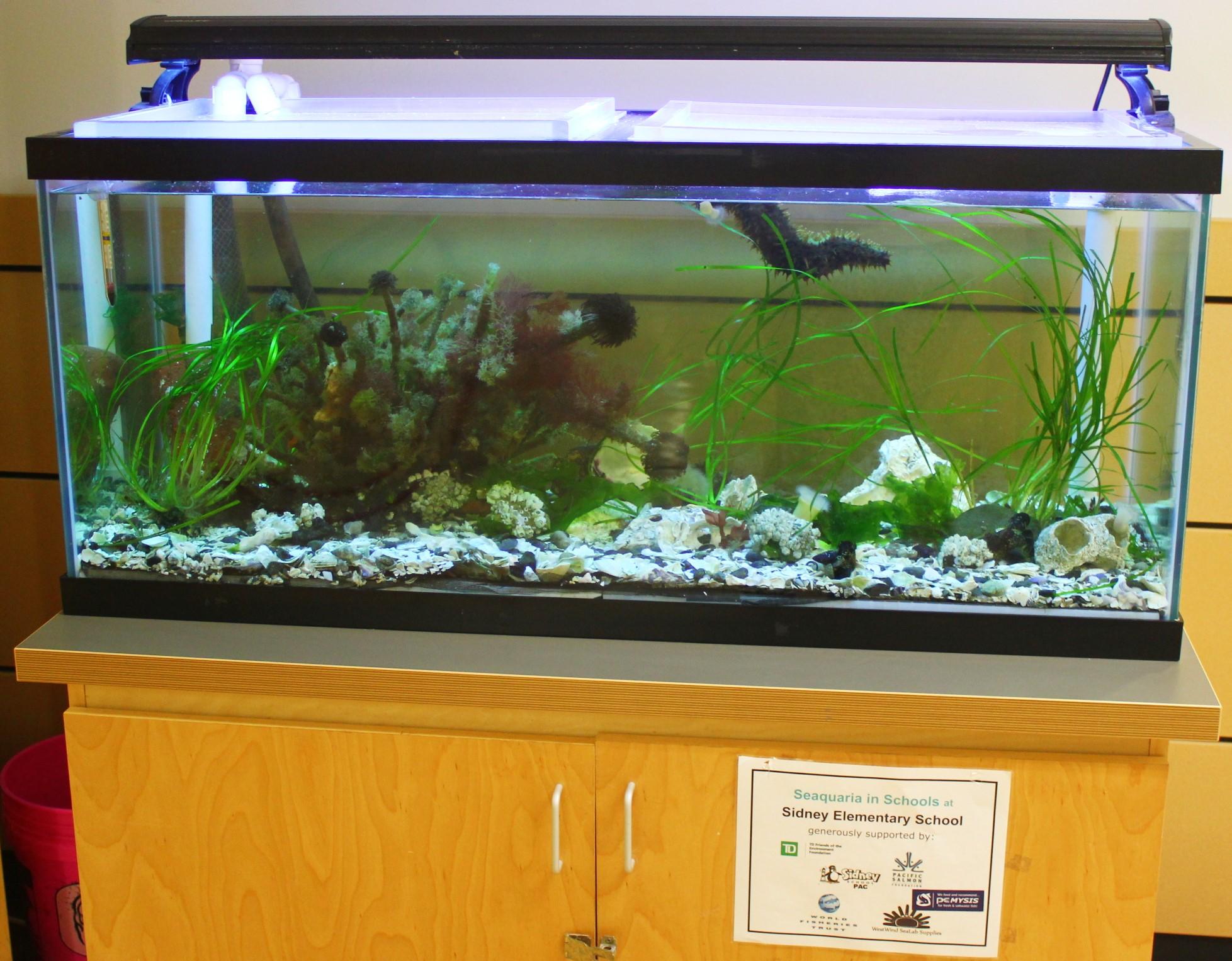 Seaquaria tank
